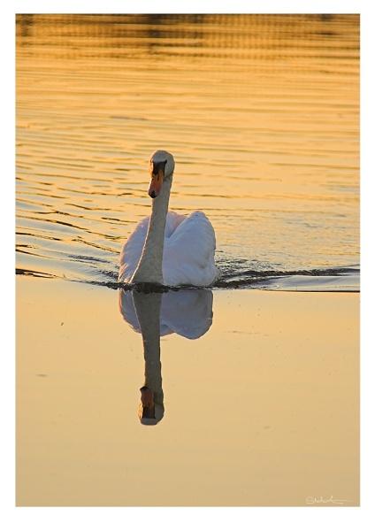 ...approaching reflections... by samartini