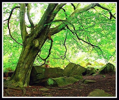 Enchanted Wood by KBan