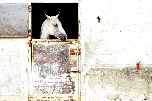 white horse by richshep