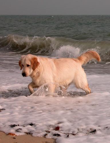 Splasher Sasha by marlin