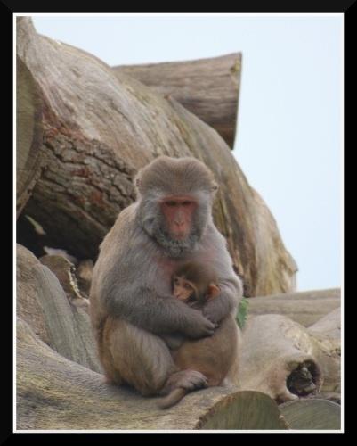 Motherhood by jaglin
