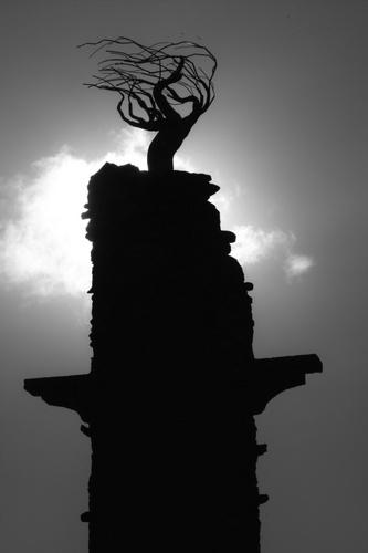 Monumental Tree by o_neip