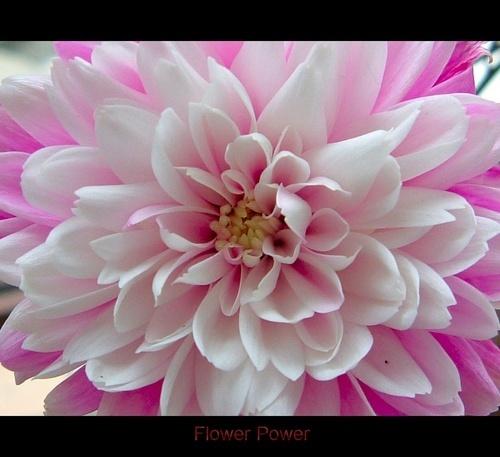 Flower Power by beavis
