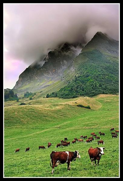 Alpine Pastures by Carol_f