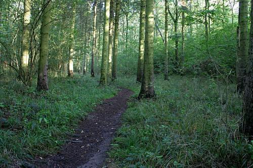 Woodland Path by clayman
