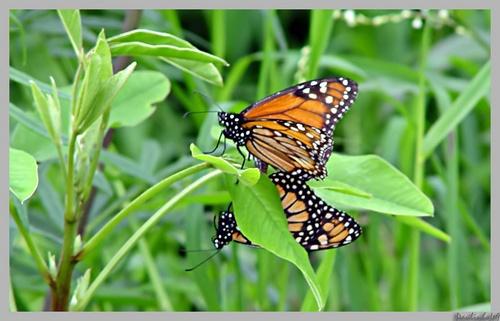 Butterflys by Paulinho49