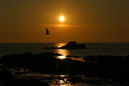 Sunset Flight by jonjeds