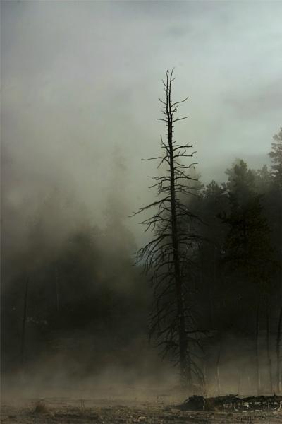 Mist at Artist Pots by gajj