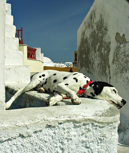 siesta in Santorini by gill_f