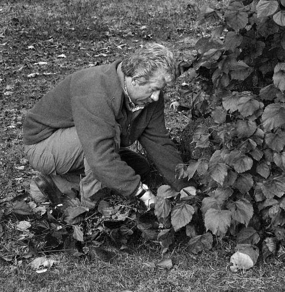 The Gardener by johnriley1uk