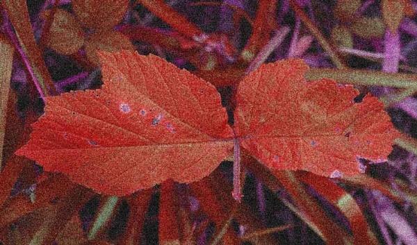 False Colour by johnriley1uk