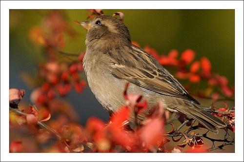 Small bird by gapet