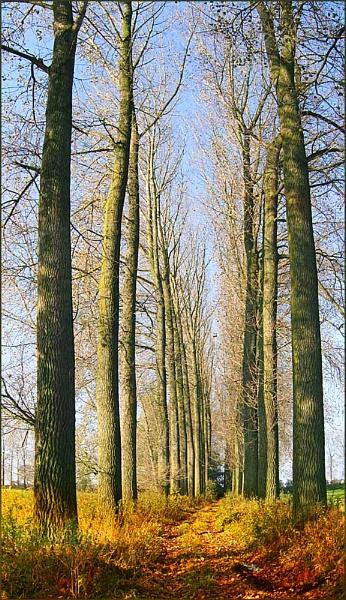 Long Lane by conrad