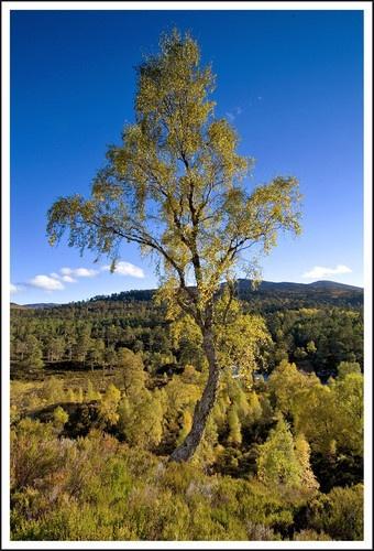 That tree by Scottishlandscapes