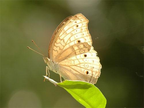 Butterfly by hrockkk