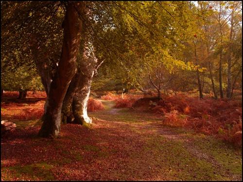 Autumn Begining by peterhorner