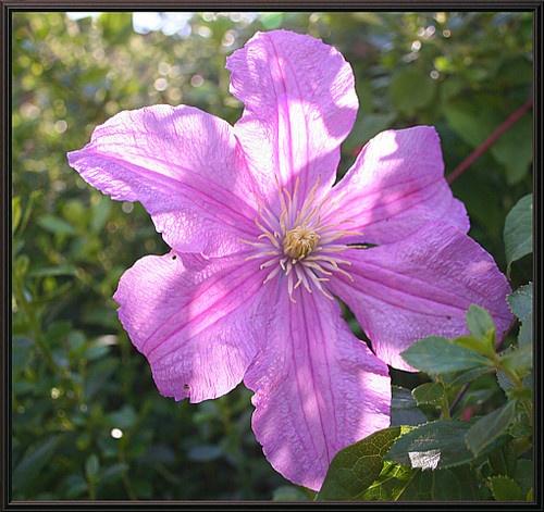Purple Flower by Alchenzo