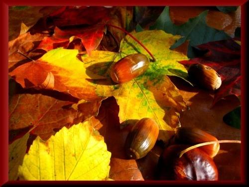 Autumn walk by Paree