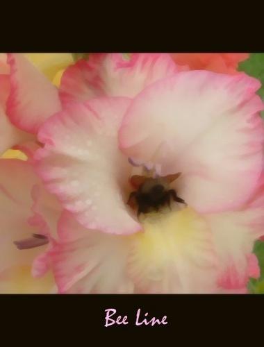 Bee Line by beavis