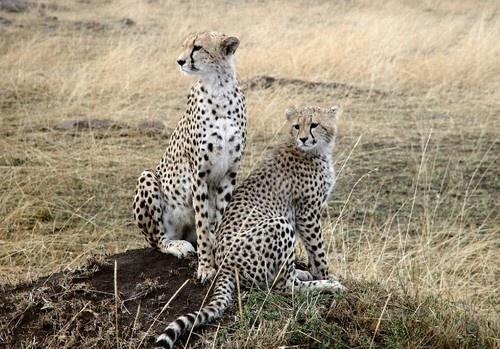 KeKi & Cub by X5DJM