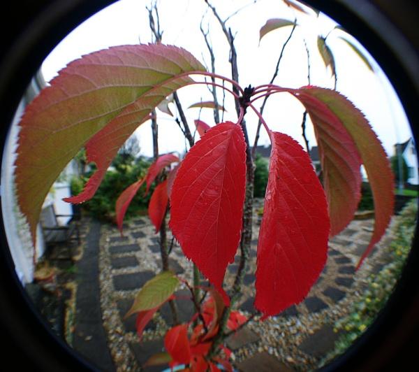 Autumn Leaves by Saxon Marsh