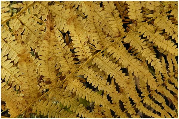 Autumn Gold by markthompson