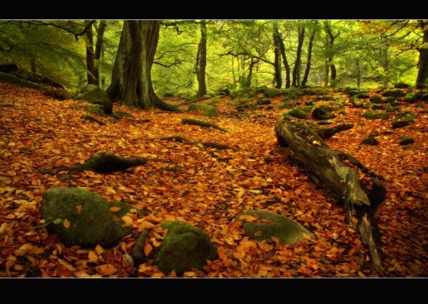 Autumn Comes by cdm36