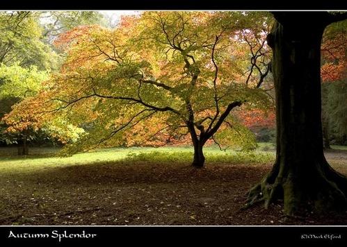 Autumn Splendor by mark_elford