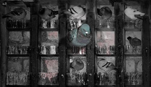 Pigeon Holed by sugar jones