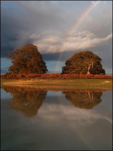 Forest Rainbow by peterhorner
