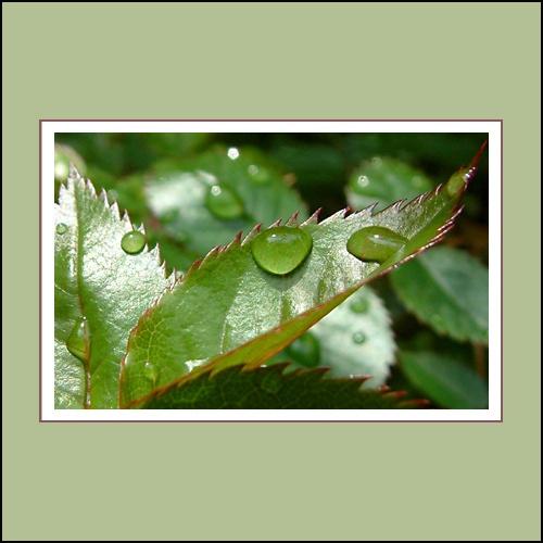 Waterproof lll by geranium