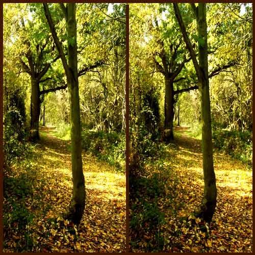 Woodland Path by LenLamb