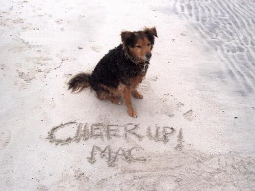 My dog \'Mac\' in Harris by Abi_Sully