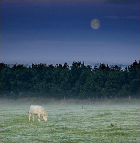 morning moon by snapbandit