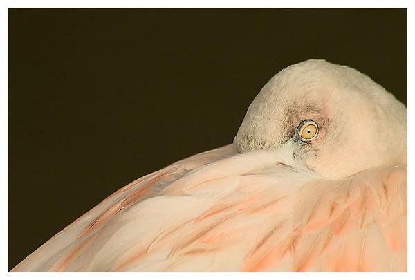 Pink by Glamrox