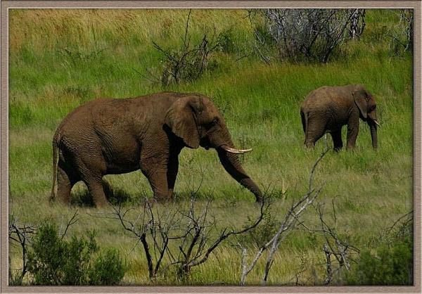 Ellie Landscape Pilanesberg by CraigSev