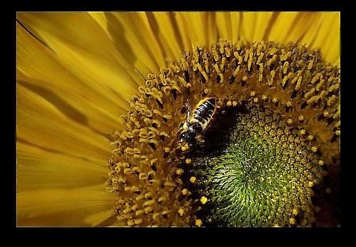 Sunny bee by Crazy_Daisy