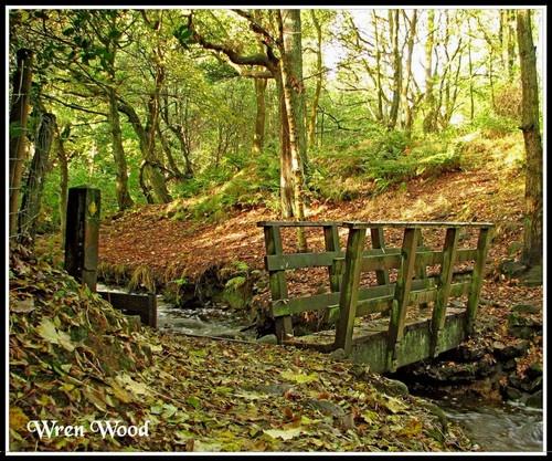 Wren Wood by KBan