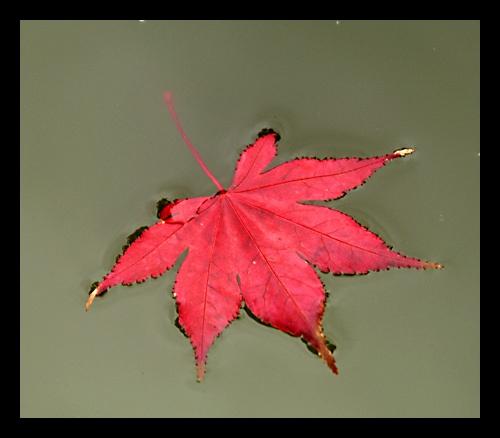 Autumn by mule