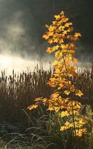 Misty Morning by manicam