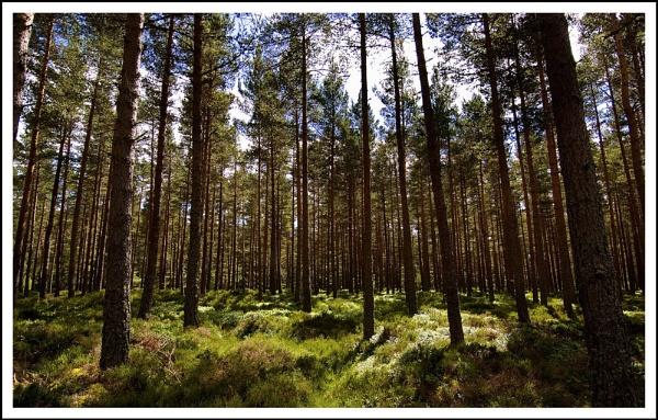 Forrest... by Scottishlandscapes