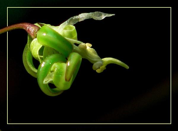 Alien fruit by Dinda