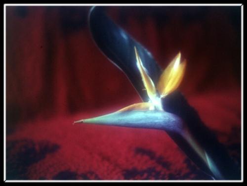 bird by tupko