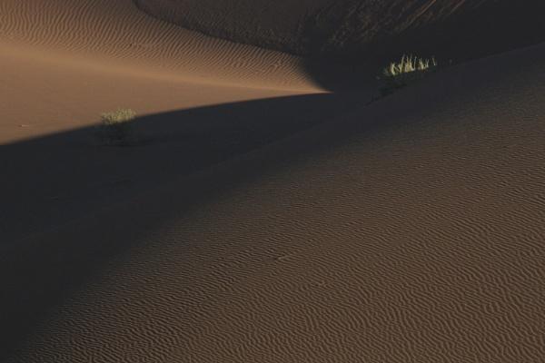 Dunes II by Ansie