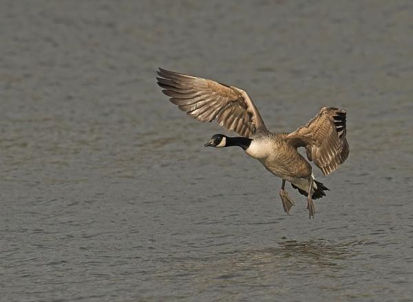 Landing by John_Wannop