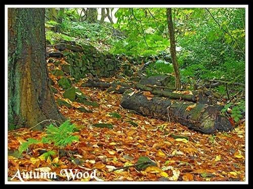 Autumn Wood by KBan