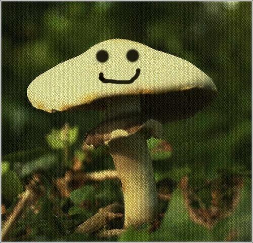 Magic Mushroom by tull