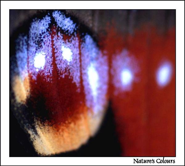 Nature\'s Colours by fredthegnome