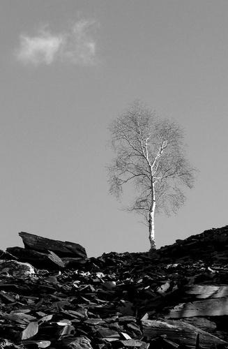 loner by David_c