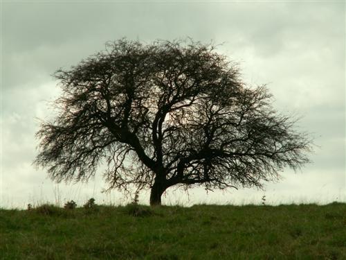 Black tree on a grey day by lexc1991